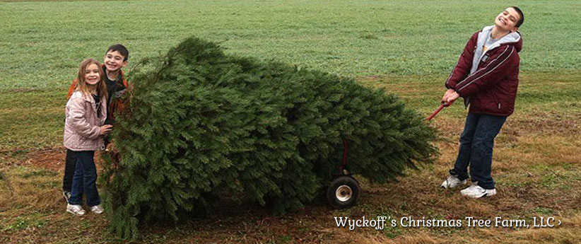 Wyckoffs Christmas Tree Farm